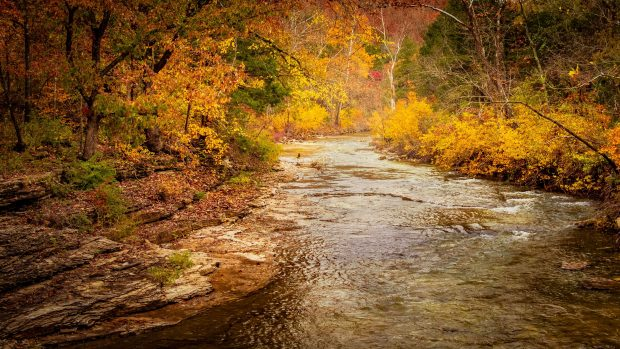 Photo of a Quiet Creek in Branson in the Fall.